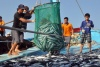 Dư nợ cho vay phát triển thủy sản theo Nghị định 67 tăng 20,25%