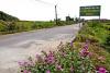 Hội Liên hiệp Phụ nữ huyện Tiên Lãng: Triển khai trồng 26 tuyến đường hoa