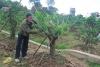 """Hội Nông dân thành phố đẩy mạnh giải ngân các dự án vay vốn """"Quỹ hỗ trợ nông dân"""""""