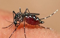 35 trường hợp mắc sốt xuất huyết tại Tiên Lãng