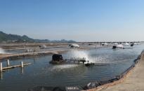 Lấy mẫu giám sát dịch bệnh tại 24 cơ sở sản xuất, kinh doanh thủy sản giống