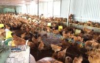 Sản lượng thịt hơi tháng 9 đạt gần 9.636 tấn