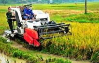 Phấn đấu năng suất lúa Xuân 2018 đạt 69,69 tạ/ha