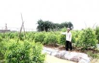 Truy tìm kẻ chặt phá gần 500 cây đào cảnh tại xã Lê Lợi, huyện An Dương