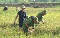Công an Thái Bình gặt lúa giúp dân khắc phục hậu quả mưa lũ