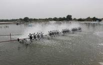Nuôi trồng thủy Hải sản ở Hải Thành (quận Dương Kinh): Đương đầu với những khó khăn