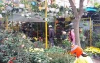 Nhộn nhịp thị trường hoa, cây cảnh