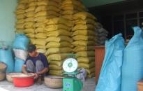 Gạo giảm giá, nhà nông lo năm học mới