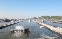 Sản lượng khai thác thủy sản ước đạt 55.438 tấn