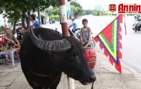 Lễ hội chọi trâu truyền thống Đồ Sơn năm 2018: Rộn ràng trước ngày khai hội