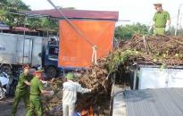 Quận Đồ Sơn: Ra quân dọn vệ sinh môi trường
