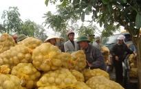 Huyện Tiên Lãng: Trồng gần 1.300 ha cây vụ xuân