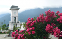 Thung lũng hoa tím đẹp như Châu Âu tại Fansipan