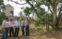 Bảo tồn cây vải tổ Thanh Hà