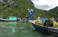 """Dự án """"Sáng kiến Liên minh Vịnh Hạ Long - Cát Bà"""": Cải thiện chất lượng nước và bảo tồn đa dạng sinh học"""