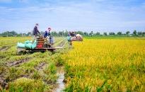 Huyện An Dương:  Phấn đấu hết tháng 10 thu hoạch xong lúa vụ mùa 2019