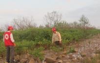 Phát hiện 2 vụ phá rừng ngập mặn tại xã Phục Lễ, Thủy Nguyên