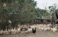 Giá trị sản xuất nông, lâm, thủy sản ước đạt 3.263,8 tỷ đồng