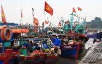 Quận Đồ Sơn: Sản lượng khai thác thủy sản bằng 108,3% so với kế hoạch