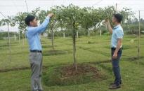 Đoàn thanh niên quận Đồ Sơn:  Đồng hành cùng thanh niên trong khởi nghiệp, lập nghiệp