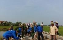 Tuổi trẻ Hải Phòng xung kích xây dựng nông thôn mới
