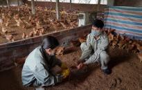 Chú trọng phòng chống dịch bệnh gia súc, gia cầm