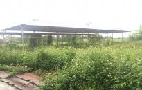 Xót xa chợ hàng chục tỷ xây xong bỏ hoang tại Vĩnh Bảo