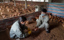 Triển khai quyết liệt, đồng bộ các biện pháp phòng, chống dịch bệnh gia súc gia cầm các tháng cuối năm