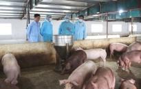 Huyện Cát Hải tập huấn 3 lớp về kỹ thuật phòng, chống bệnh dịch tả lợn Châu Phi