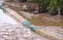 Ban quản lý vịnh Cát Bà: Tiêu hủy hơn 1.000 m lồng bát quái