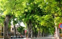 Quản lý cây xanh bằng công nghệ số