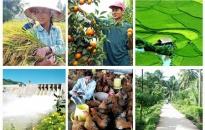 Hoàn thiện thể chế quản lý nhà nước trong xây dựng nông nghiệp, nông thôn