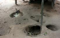 Đi xem đua chó Phú Quốc