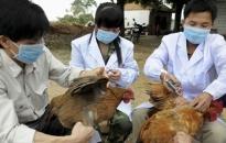 Huyện Kiến Thụy: Chủ động phòng chống dịch bệnh gia súc, gia cầm