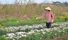 Xã  Đồng Thái (An Dương): Phấn đấu thu nhập bình quân đầu người đến năm 2020 đạt 90 triệu đồng/người/năm