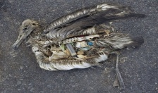 """Đường giao thông làm từ nhựa tái chế-Giải pháp giảm thiểu """"ô nhiễm trắng"""""""