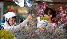 Quận Hồng Bàng: Khai mạc chợ hoa Xuân 2018