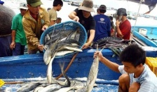 Trên 430 tỷ đồng cho vay phát triển thủy sản