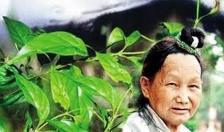 Người đàn bà tàn độc, sát hại 3 người thân bằng rễ cây lá ngón
