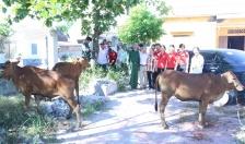 Trao tặng bò giống sinh sản
