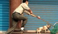 Trộm chó lĩnh án