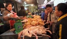 Giá gia cầm đang đà tăng theo giá thịt lợn