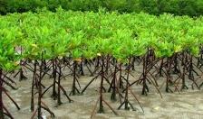 Về việc lập chứng từ khống trồng rừng để lấy tiền tại xã Đông Hưng (Tiên Lãng)