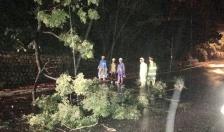 Lực lượng CSGT Công an quận Đồ Sơn:  Dọn cây đổ ngay trong đêm đảm bảo ATGT mùa mưa bão