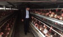 Đẩy mạnh tái cơ cấu ngành chăn nuôi