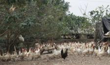 Đẩy mạnh chuyển dịch cơ cấu kinh tế nền nông nghiệp