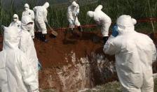 Bệnh dịch tả lợn châu Phi xuất hiện tại Việt Nam: Thận trọng nhưng không nên hoang mang
