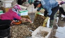 Chi cục Thủy sản: Cấp 27 giấy chứng nhận đăng ký tàu cá