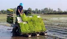 Huyện Tiên Lãng:  Phấn đấu gieo cấy 3.000 ha lúa chất lượng cao