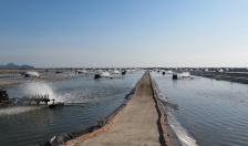 Chống khai thác hủy diệt nguồn lợi thủy hải sản: Cần giải pháp quyết liệt và đồng bộ